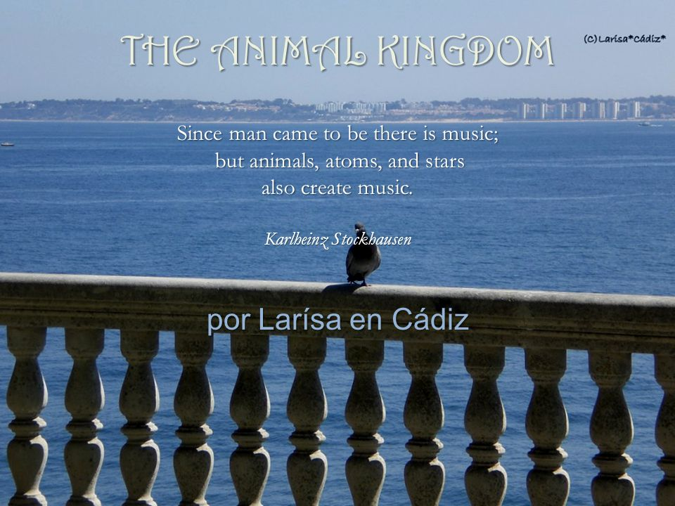 por Larísa en Cádiz Since man came to be there is music; but animals, atoms, and stars also create music.