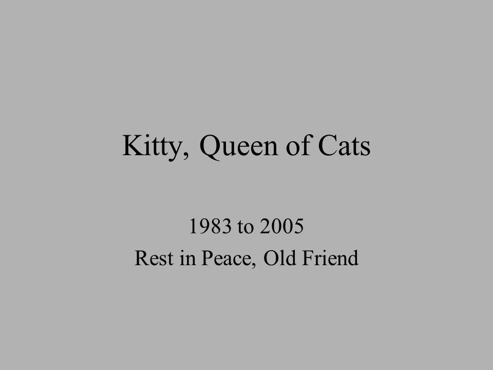 Kitty, Queen of Cats 1983 to 2005 Rest in Peace, Old Friend