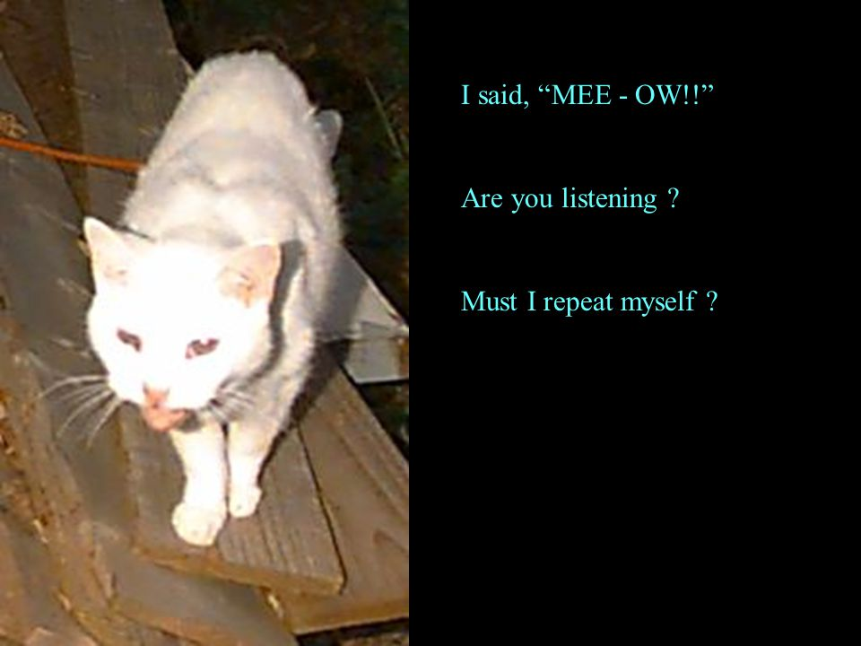 I said, MEE - OW!! Are you listening ? Must I repeat myself ?