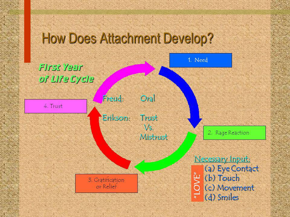 How Does Attachment Develop? 1. Need2. Rage Reaction 3. Gratification or Relief 4. Trust Freud: Oral Erikson: Trust Vs. Mistrust Necessary Input: (a)