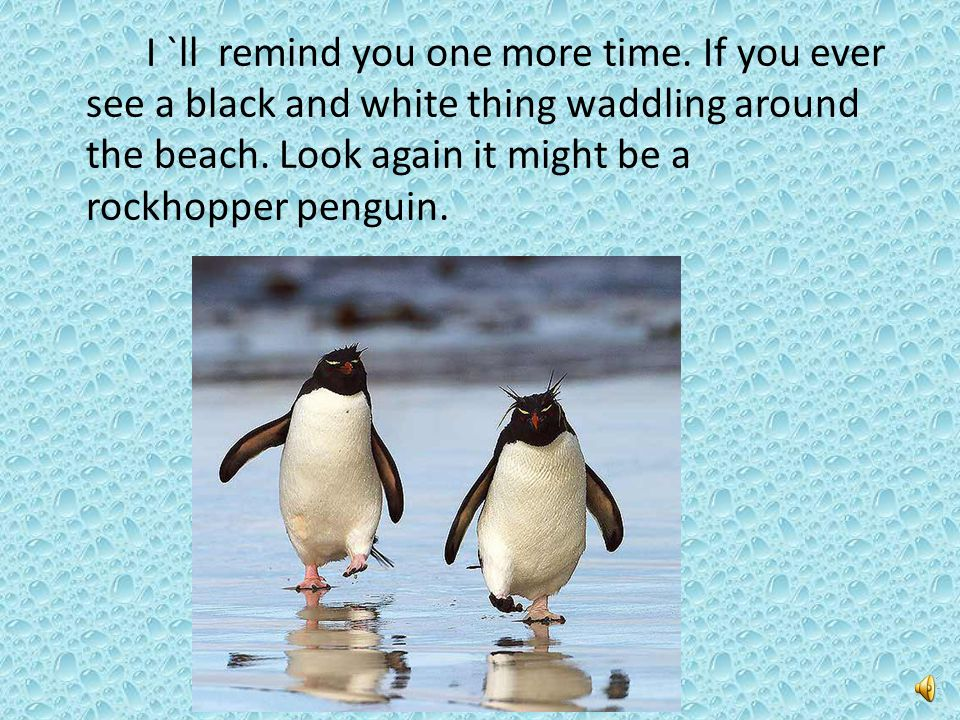 I `ll remind you one more time.If you ever see a black and white thing waddling around the beach.