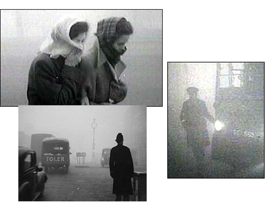 Minamata Bay Mercury Poisoning Late 1950s