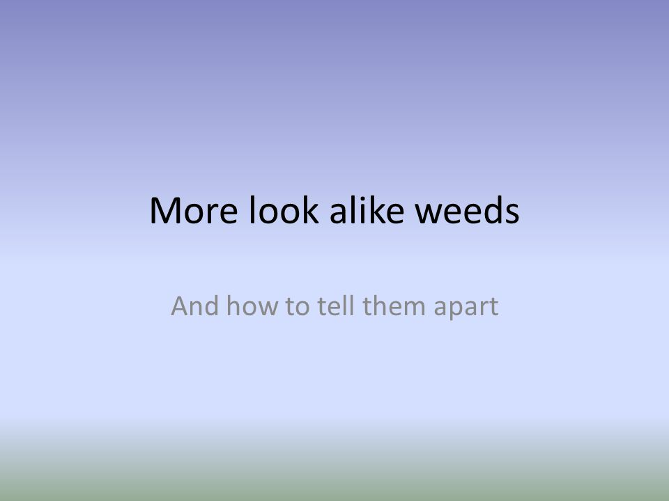 More look alike weeds And how to tell them apart