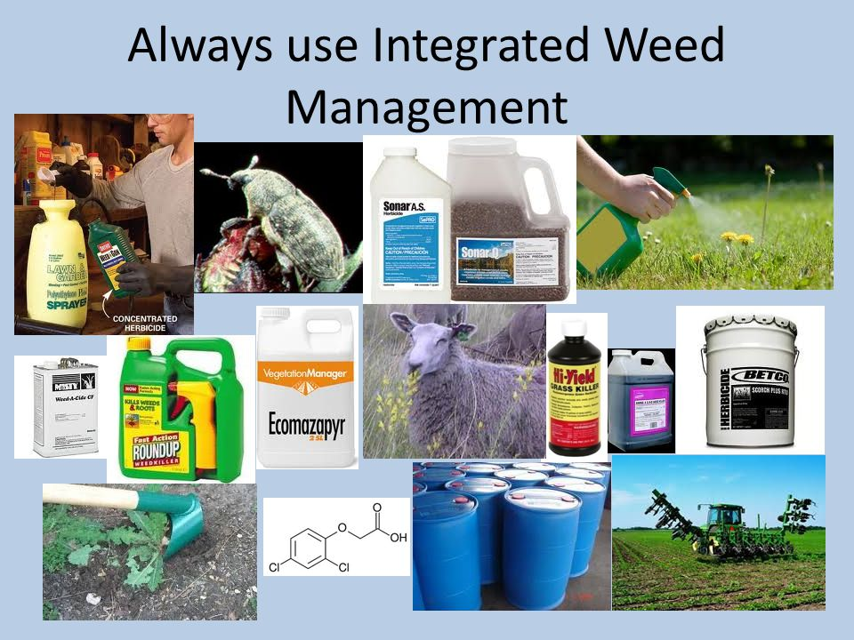 Always use Integrated Weed Management