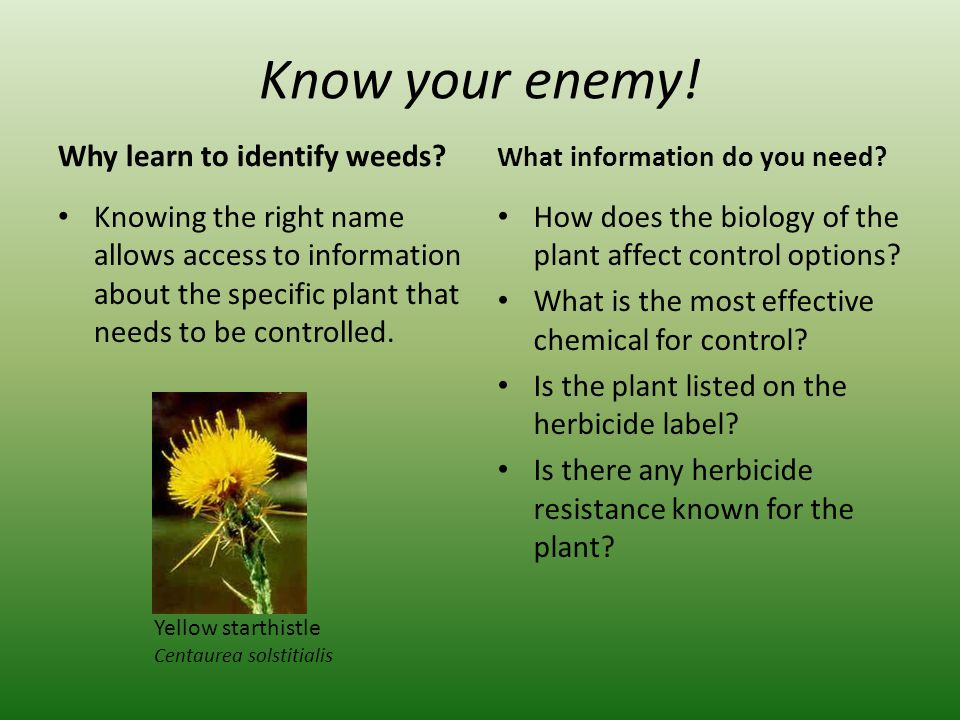 Other Ways to Identify Weeds Use reference books Use online resources Ask someone who knows weeds