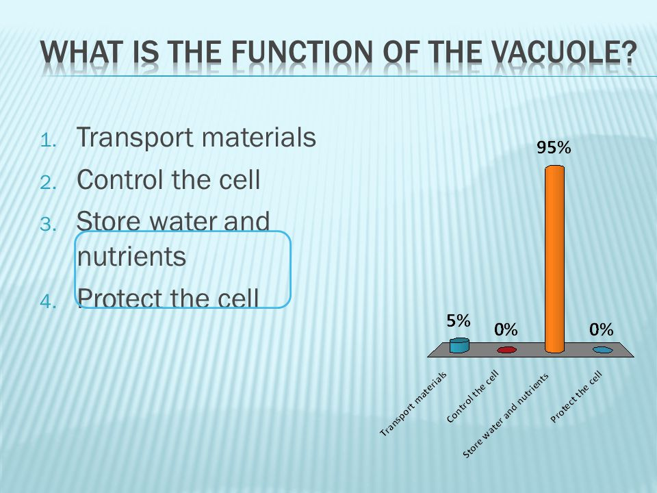 1. Transport materials 2. Control the cell 3. Store water and nutrients 4. Protect the cell