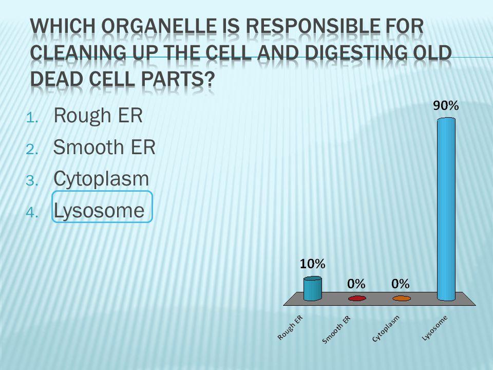 1. Rough ER 2. Smooth ER 3. Cytoplasm 4. Lysosome