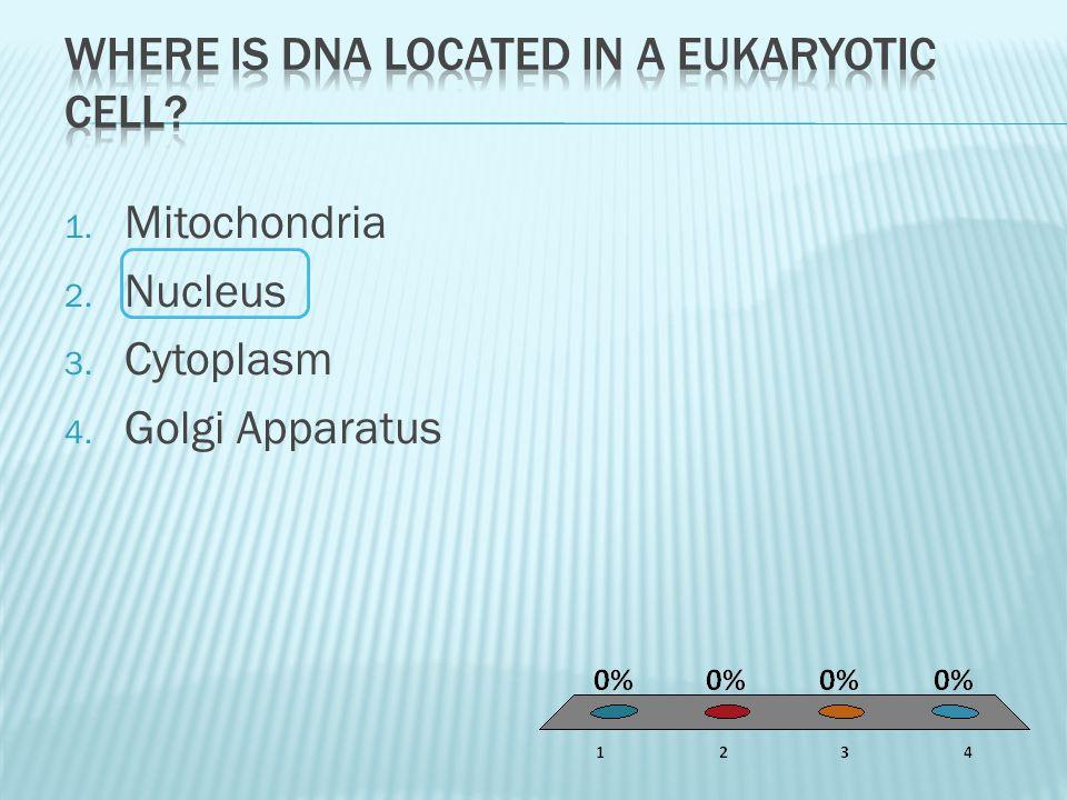 1. Mitochondria 2. Nucleus 3. Cytoplasm 4. Golgi Apparatus