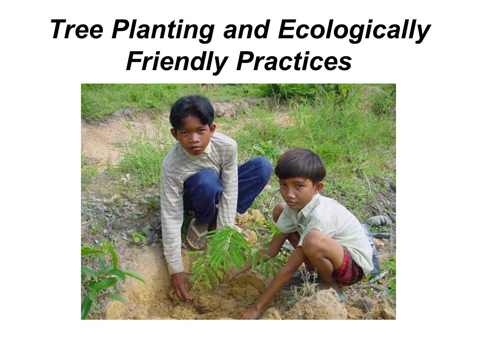 Tree Planting and Ecologically Friendly Practices