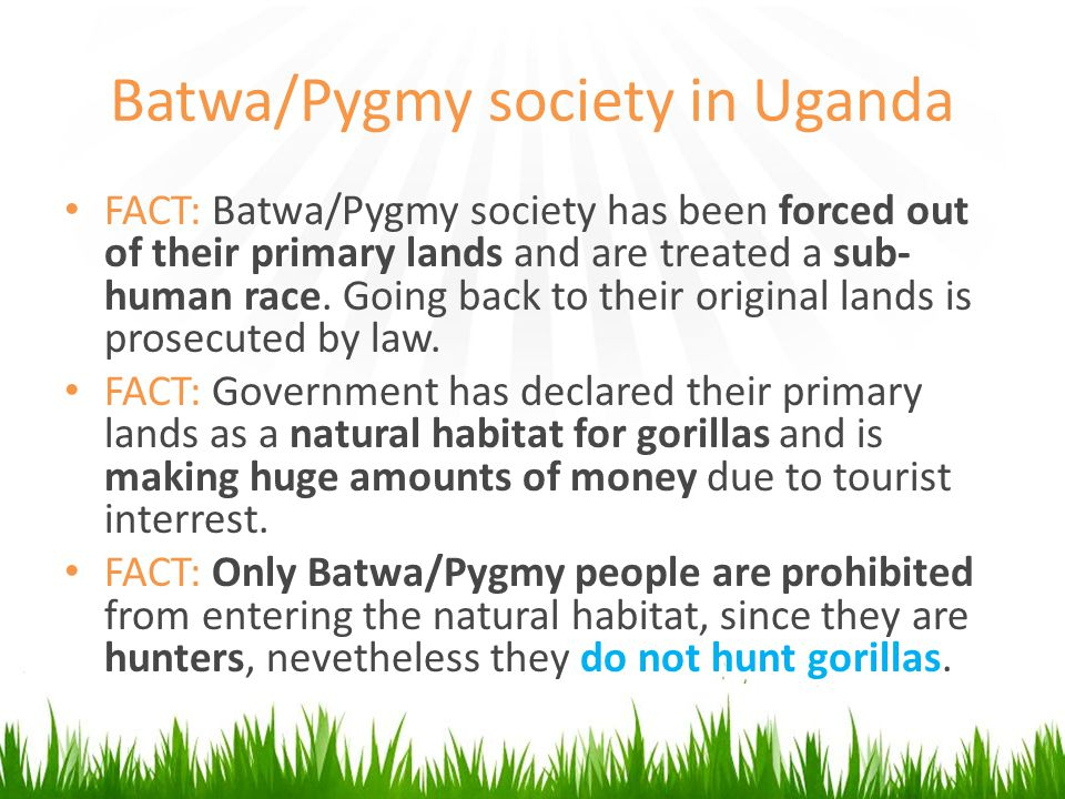 Batwa/Pygmy society in Uganda FACT: Batwa/Pygmy society has been forced out of their primary lands and are treated a sub- human race.
