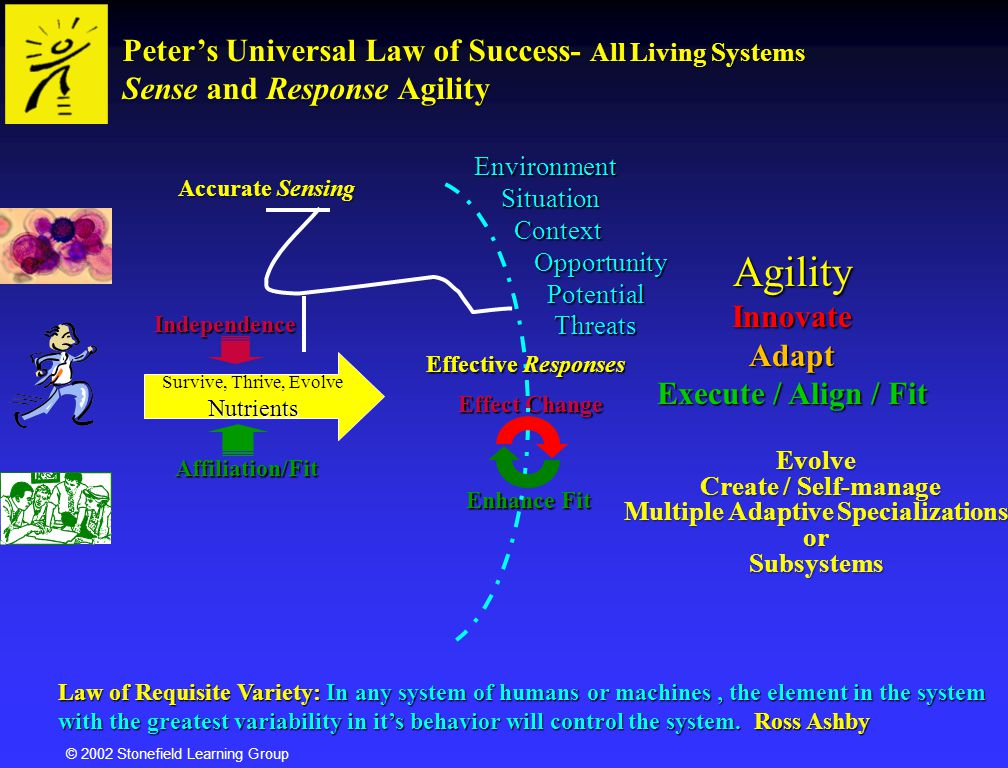 © 2002 Stonefield Learning Group Personality as Complex Adaptive SystemEmergence Complex Adaptive Behavior ChangingEnvironment ChangingEnvironment ChangingEnvironment ChangingEnvironment Info In Info Out Self-organizedSubsystems Negative Feedback Positive Feedback A system that can see itself and act on what it sees is inherently more effective and agile.