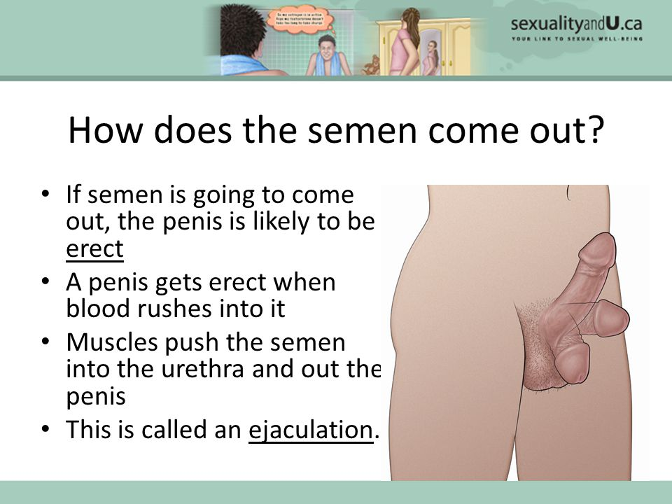 How does the semen come out.