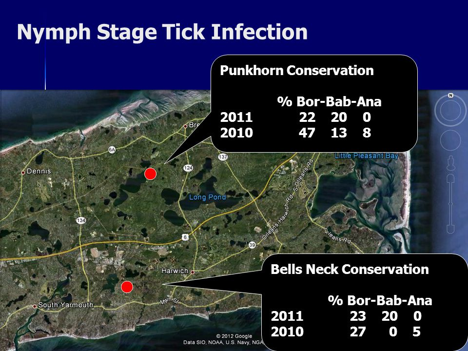 Nymph Stage Tick Infection Punkhorn Conservation % Bor-Bab-Ana 2011 22 20 0 2010 47 13 8 Bells Neck Conservation % Bor-Bab-Ana 2011 23 20 0 2010 27 0 5