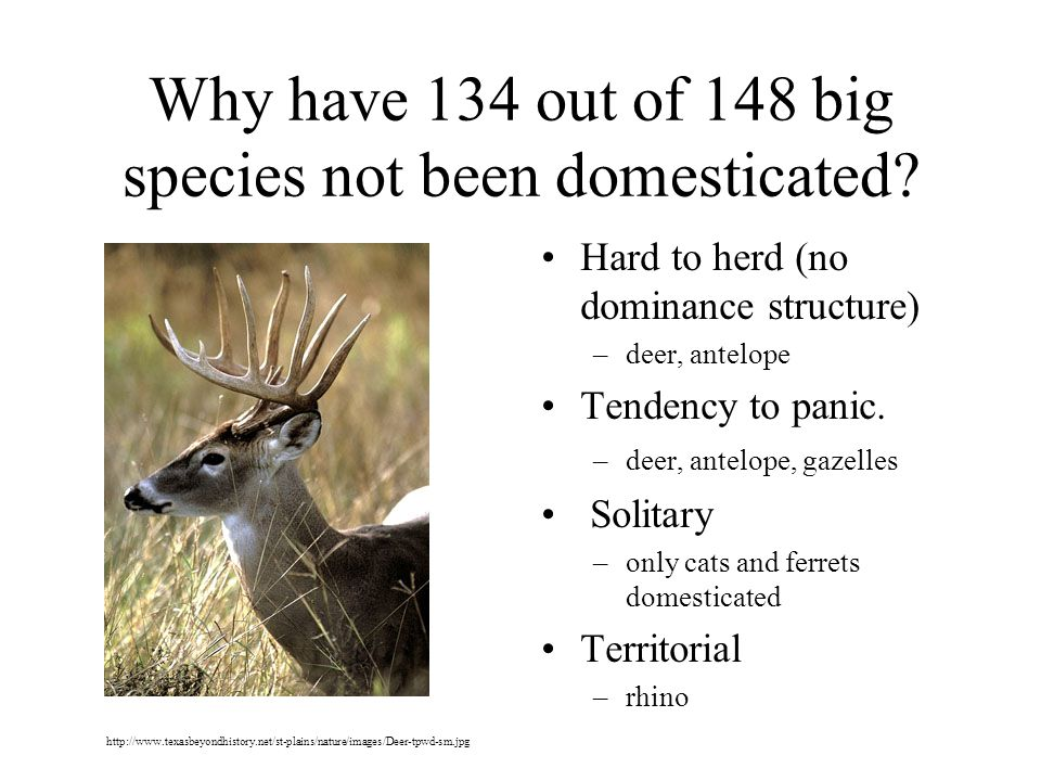 Why have 134 out of 148 big species not been domesticated.
