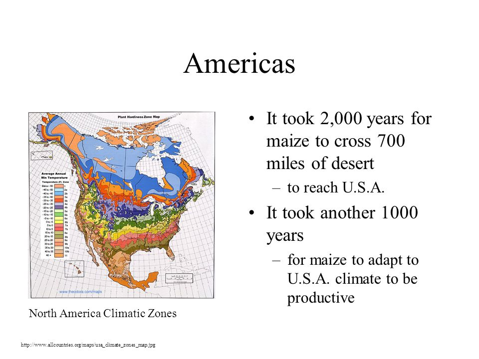 Americas It took 2,000 years for maize to cross 700 miles of desert –to reach U.S.A.