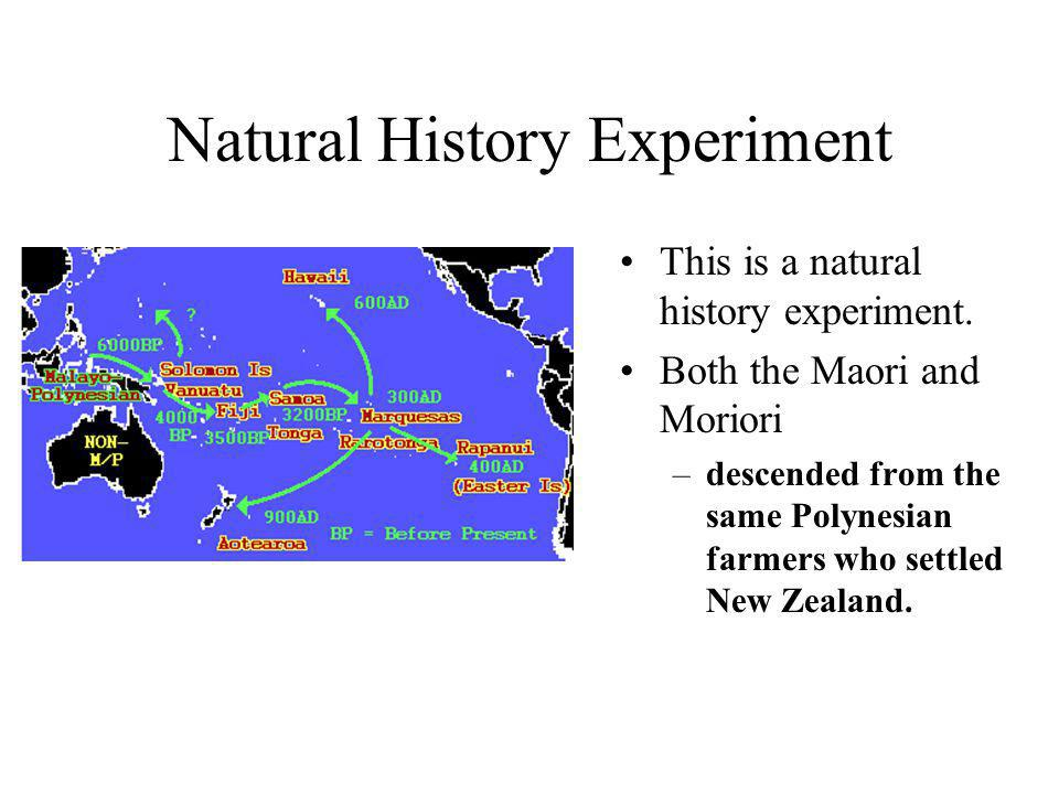 Natural History Experiment This is a natural history experiment. Both the Maori and Moriori –descended from the same Polynesian farmers who settled Ne