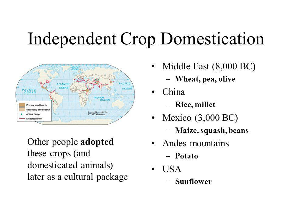 Independent Crop Domestication Middle East (8,000 BC) –Wheat, pea, olive China –Rice, millet Mexico (3,000 BC) –Maize, squash, beans Andes mountains –Potato USA –Sunflower Other people adopted these crops (and domesticated animals) later as a cultural package