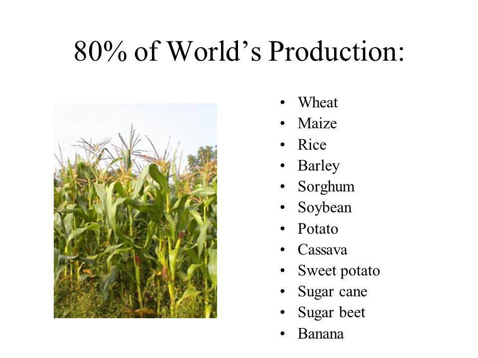 80% of Worlds Production: Wheat Maize Rice Barley Sorghum Soybean Potato Cassava Sweet potato Sugar cane Sugar beet Banana