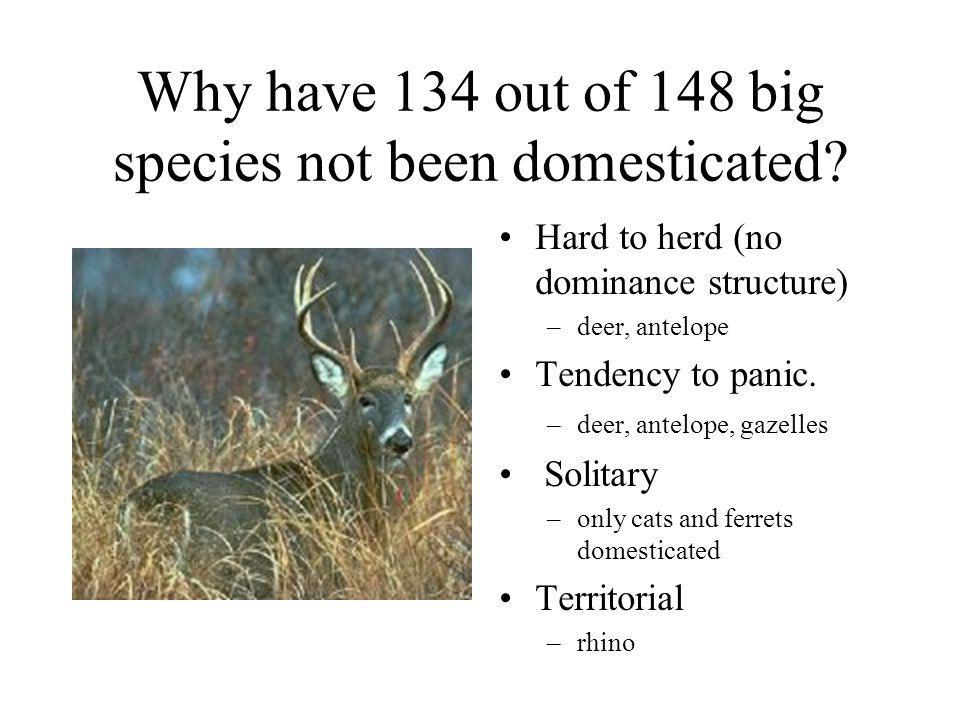 Why have 134 out of 148 big species not been domesticated? Hard to herd (no dominance structure) –deer, antelope Tendency to panic. –deer, antelope, g