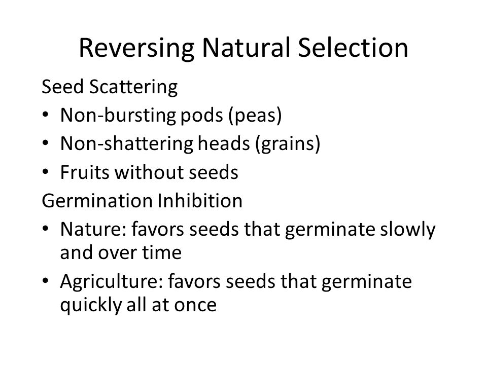 Reversing Natural Selection Seed Scattering Non-bursting pods (peas) Non-shattering heads (grains) Fruits without seeds Germination Inhibition Nature: