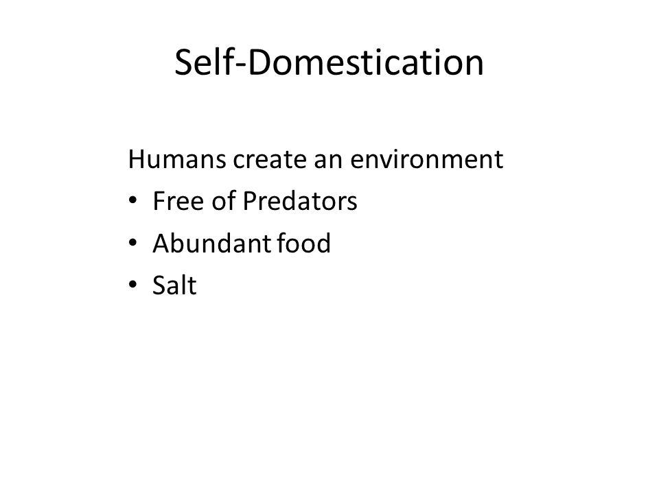 Self-Domestication Humans create an environment Free of Predators Abundant food Salt