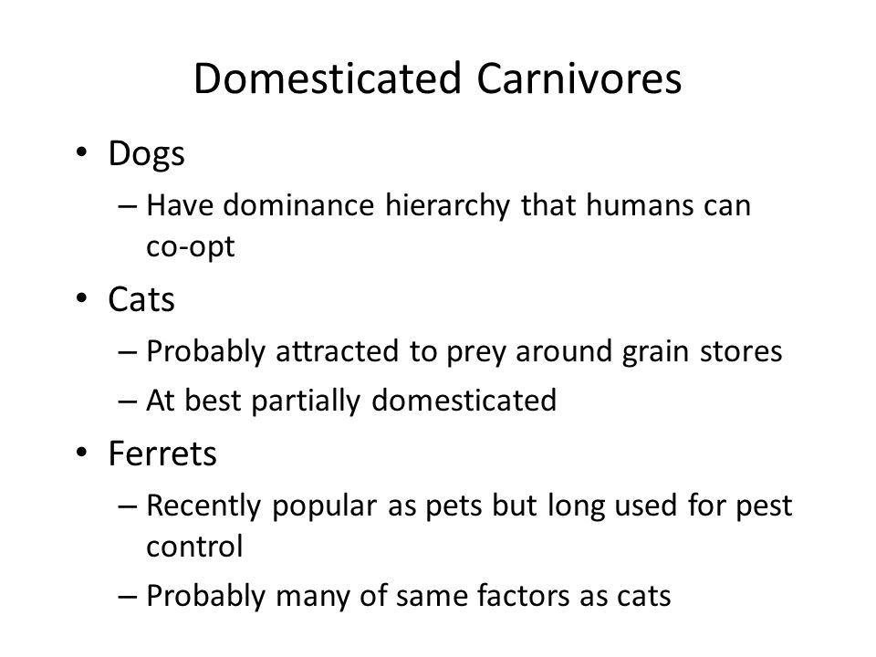 Domesticated Carnivores Dogs – Have dominance hierarchy that humans can co-opt Cats – Probably attracted to prey around grain stores – At best partial