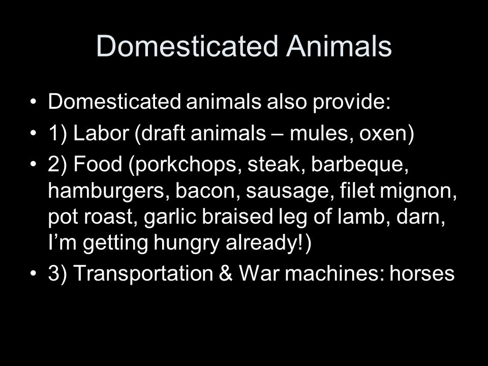 Domesticated Animals Domesticated animals also provide: 1) Labor (draft animals – mules, oxen) 2) Food (porkchops, steak, barbeque, hamburgers, bacon,