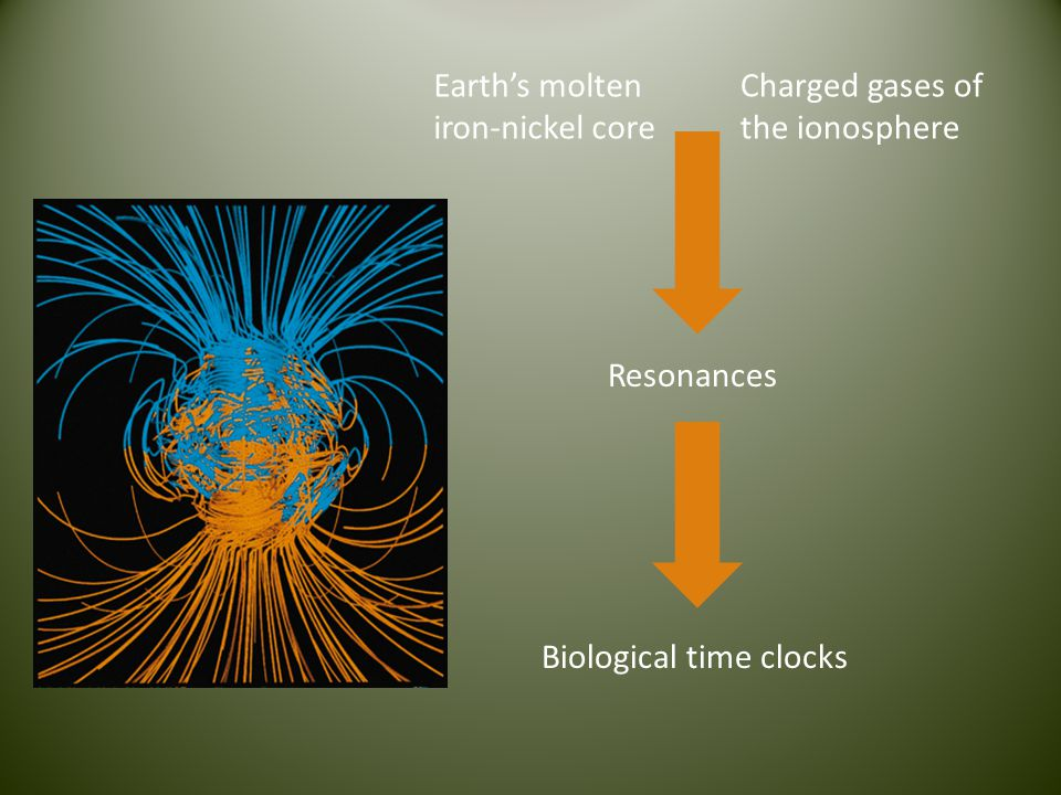 Earths molten iron-nickel core Charged gases of the ionosphere Resonances Biological time clocks