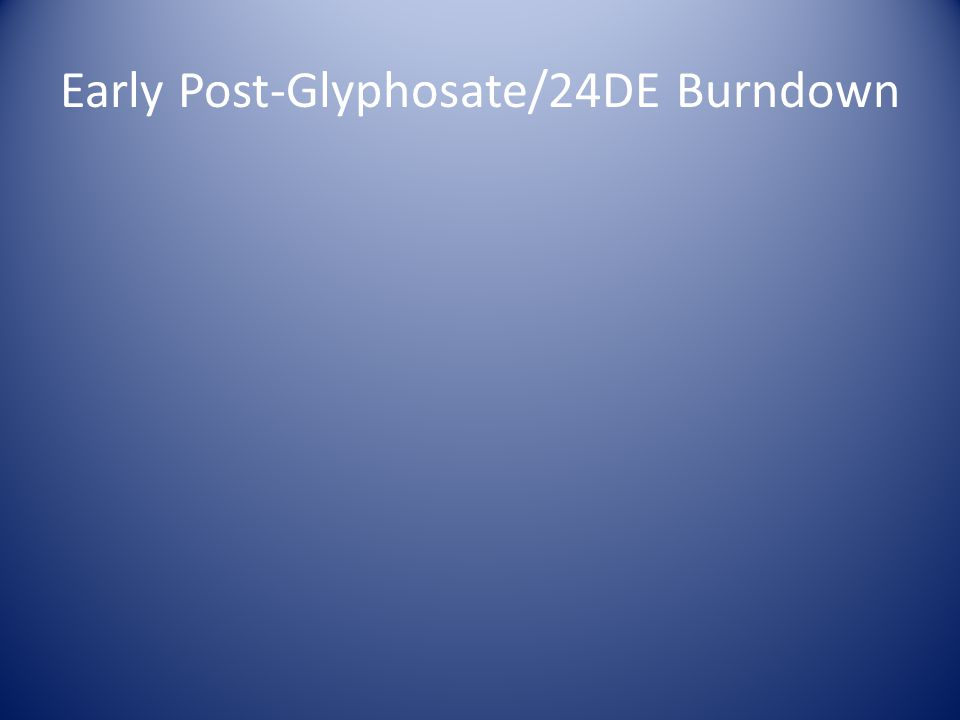 Early Post-Glyphosate/24DE Burndown