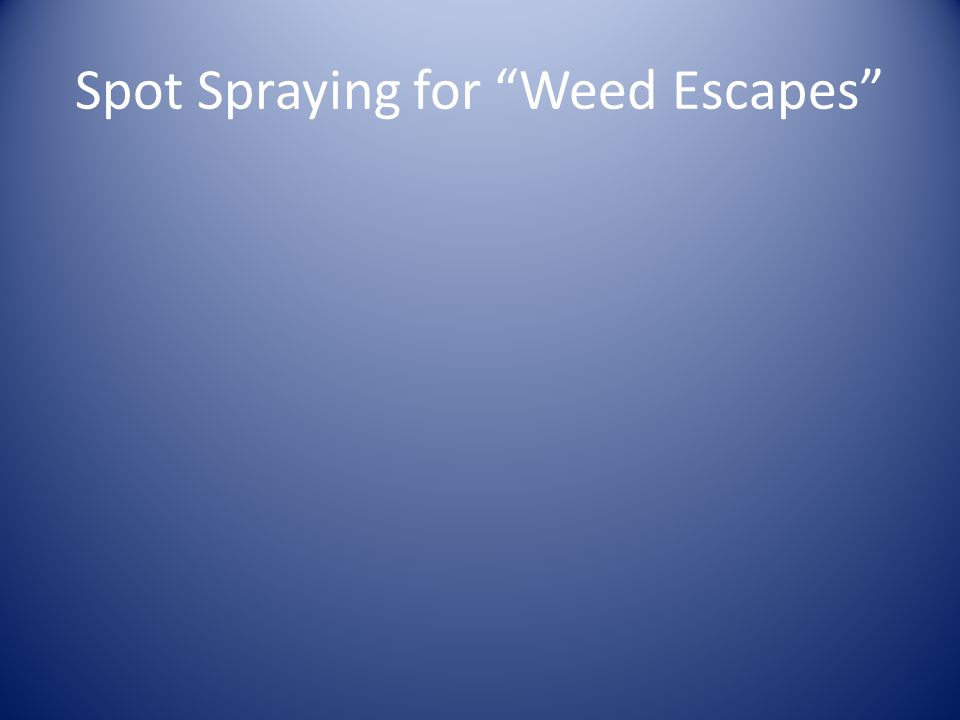Spot Spraying for Weed Escapes