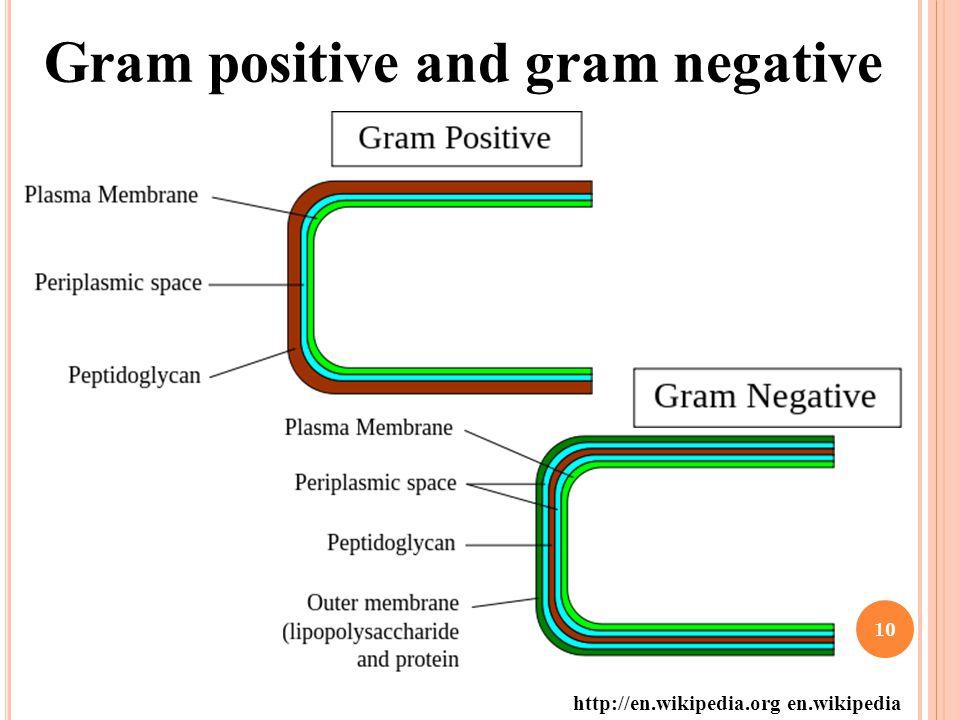 Gram positive and gram negative http://en.wikipedia.org en.wikipedia 10