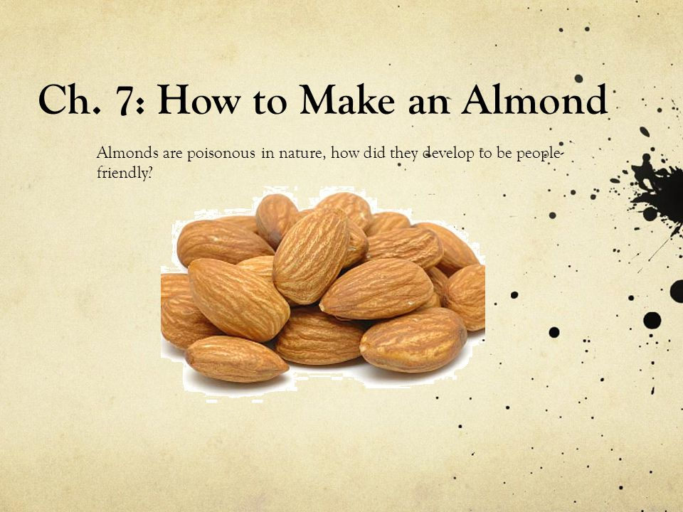 Almonds are poisonous in nature, how did they develop to be people- friendly.