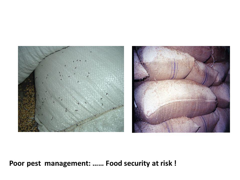 Poor pest management: …… Food security at risk !