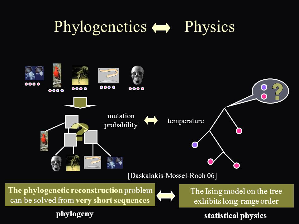 Phylogenetics Physics The phylogenetic reconstruction problem can be solved from very short sequences The Ising model on the tree exhibits long-range order phylogeny statistical physics [Daskalakis-Mossel-Roch 06] mutation probability temperature