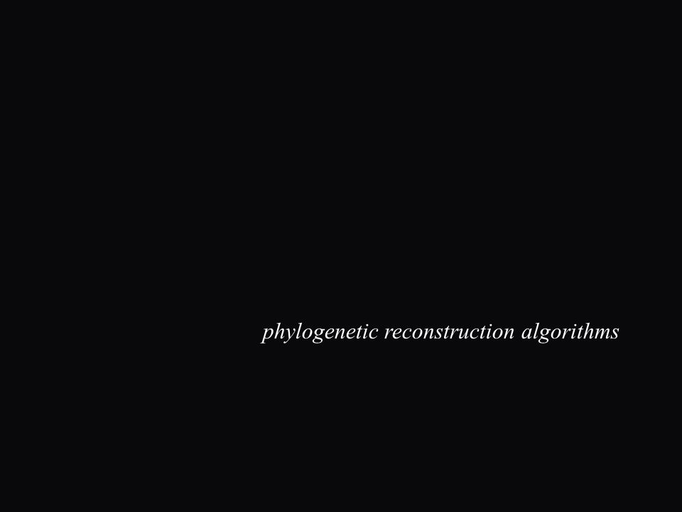 phylogenetic reconstruction algorithms