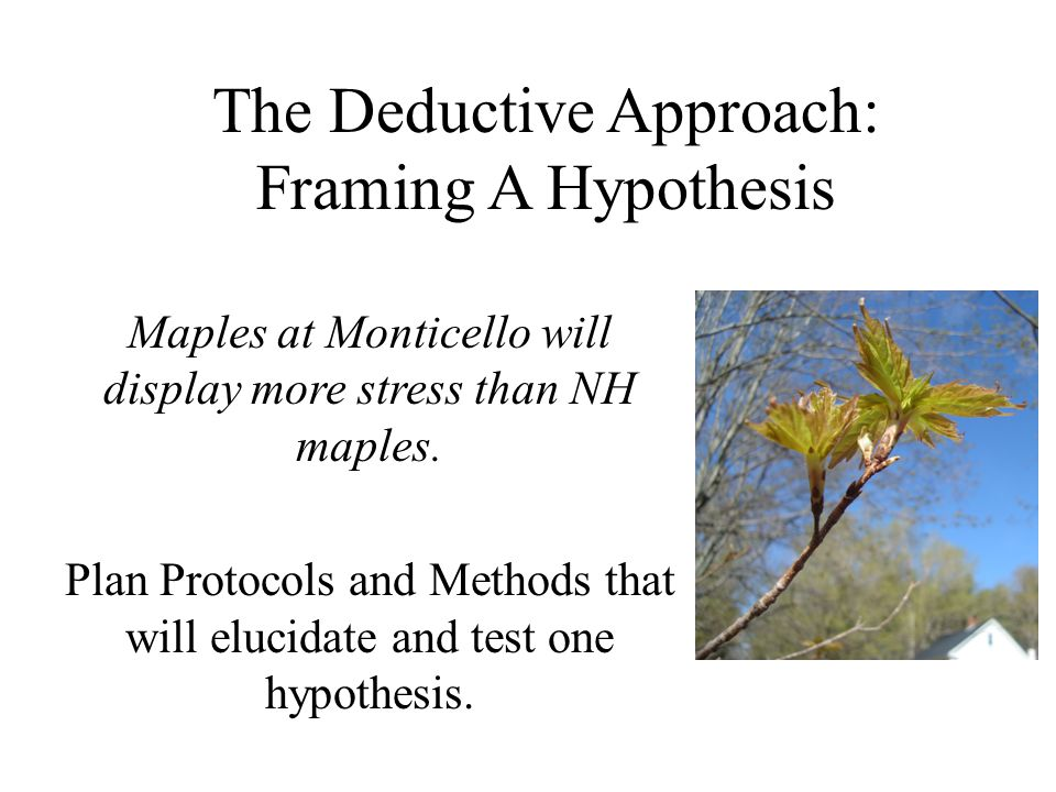 The Deductive Approach: Framing A Hypothesis Maples at Monticello will display more stress than NH maples.