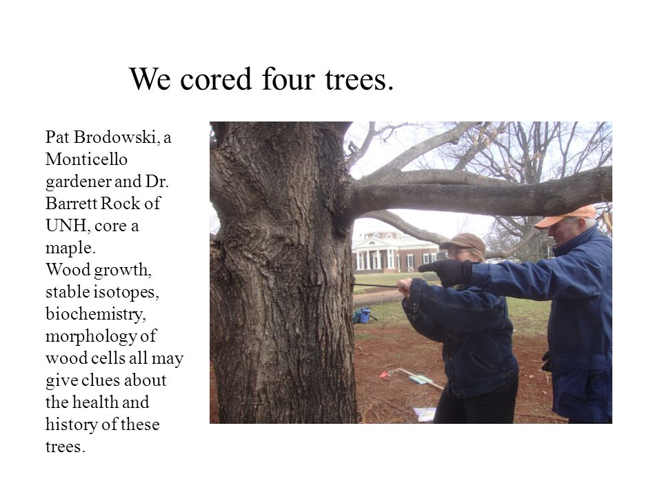 We cored four trees. Pat Brodowski, a Monticello gardener and Dr.