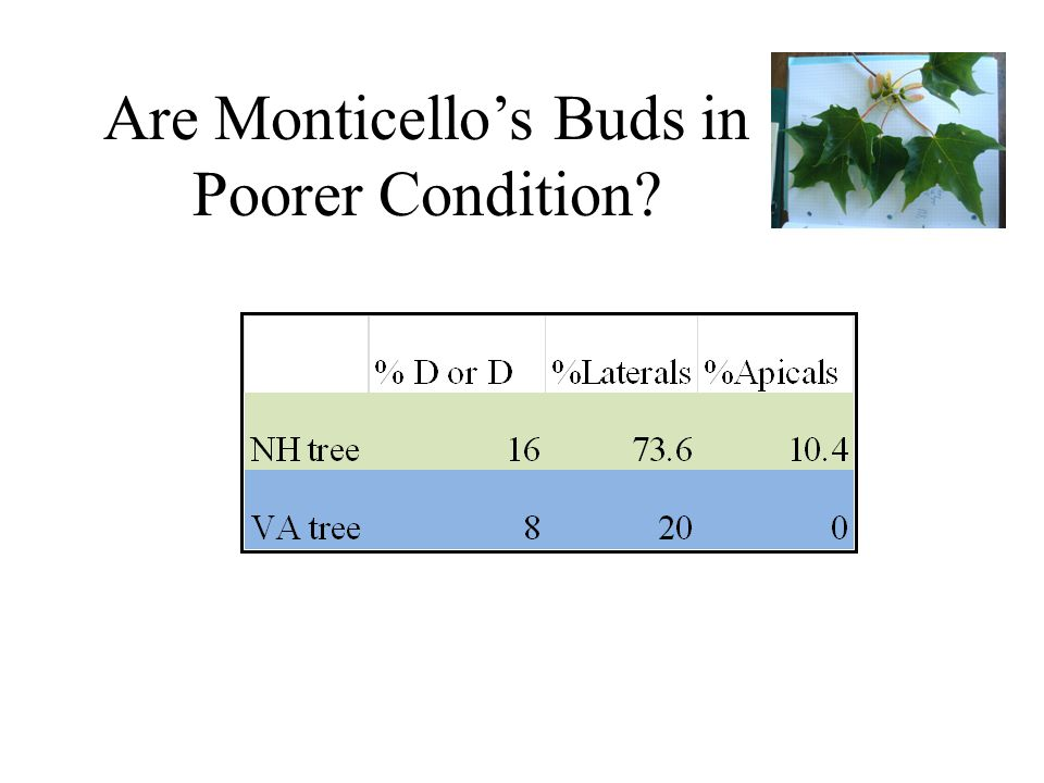 Are Monticellos Buds in Poorer Condition?