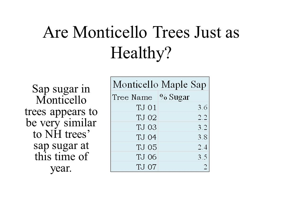 Are Monticello Trees Just as Healthy? Sap sugar in Monticello trees appears to be very similar to NH trees sap sugar at this time of year.