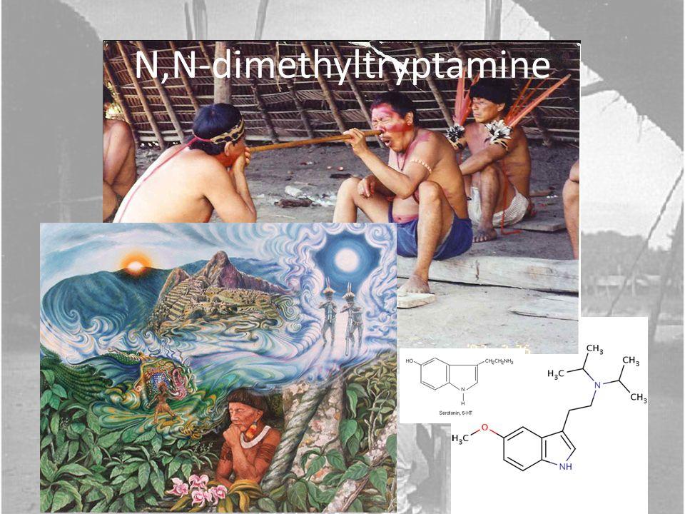 Major Publications: Yanomamö: The Fierce People, 1968 Chagnon, N.