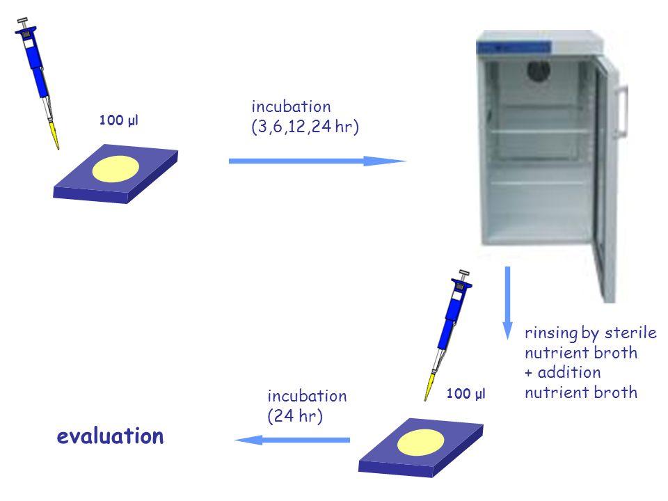 100 μl incubation (3,6,12,24 hr) rinsing by sterile nutrient broth + addition nutrient broth 100 μl incubation (24 hr) evaluation