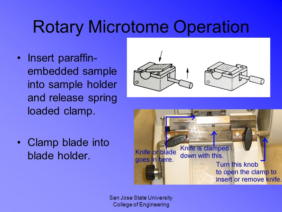 San Jose State University College of Engineering Rotary Microtome Operation Insert paraffin- embedded sample into sample holder and release spring loa