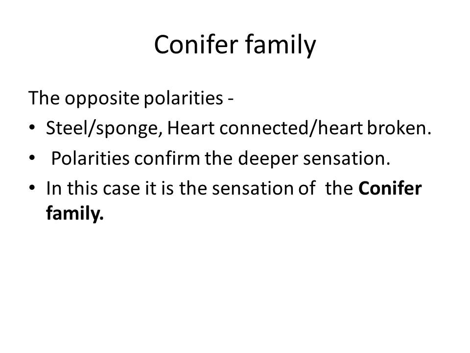 Conifer family The opposite polarities - Steel/sponge, Heart connected/heart broken. Polarities confirm the deeper sensation. In this case it is the s