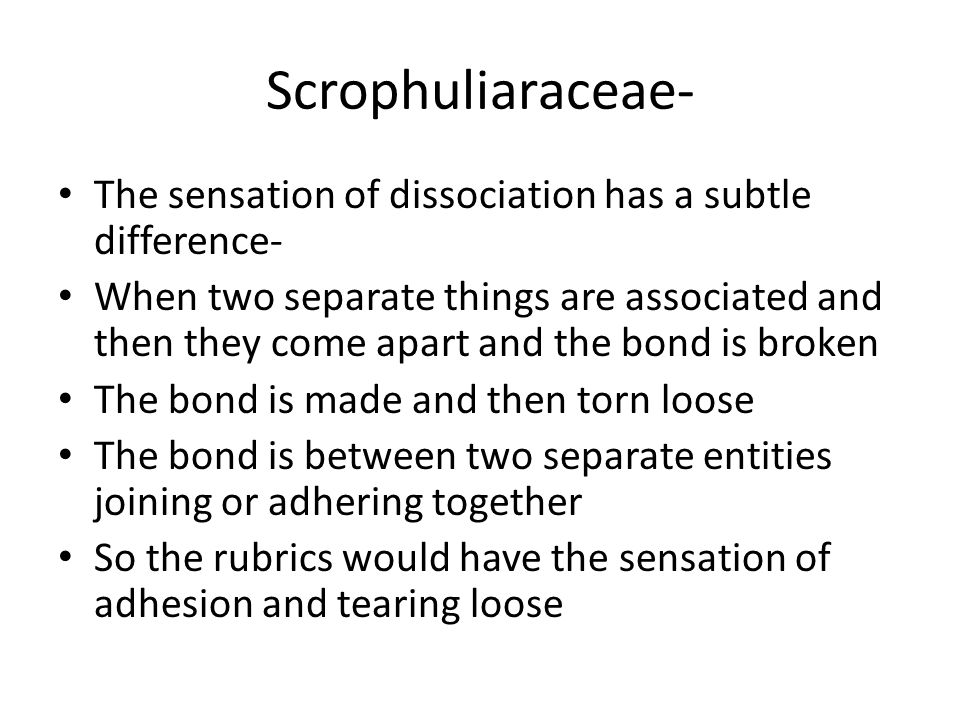 Scrophuliaraceae- The sensation of dissociation has a subtle difference- When two separate things are associated and then they come apart and the bond is broken The bond is made and then torn loose The bond is between two separate entities joining or adhering together So the rubrics would have the sensation of adhesion and tearing loose
