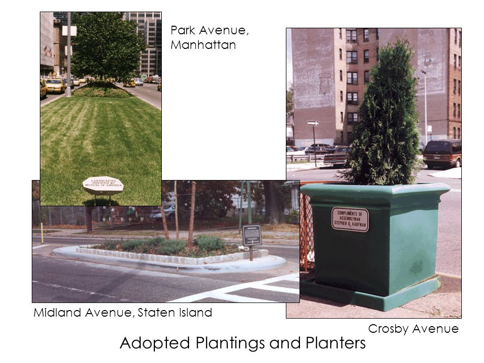 Adopted Plantings and Planters Park Avenue, Manhattan Crosby Avenue Midland Avenue, Staten Island