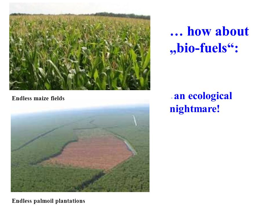 … how about bio-fuels: - an ecological nightmare! Endless maize fields Endless palmoil plantations