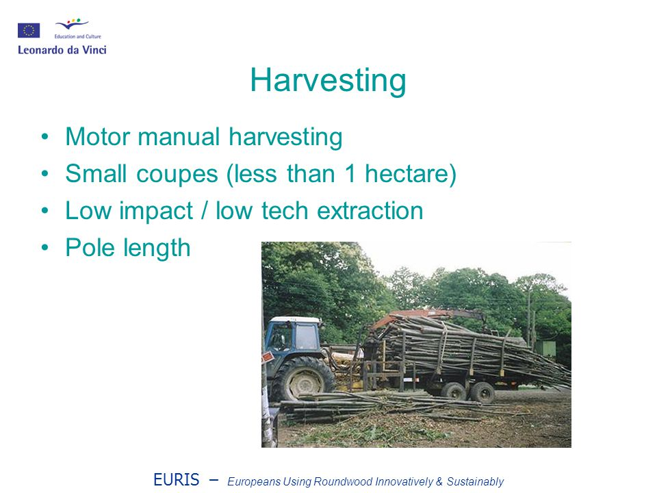 EURIS – Europeans Using Roundwood Innovatively & Sustainably Harvesting Motor manual harvesting Small coupes (less than 1 hectare) Low impact / low tech extraction Pole length