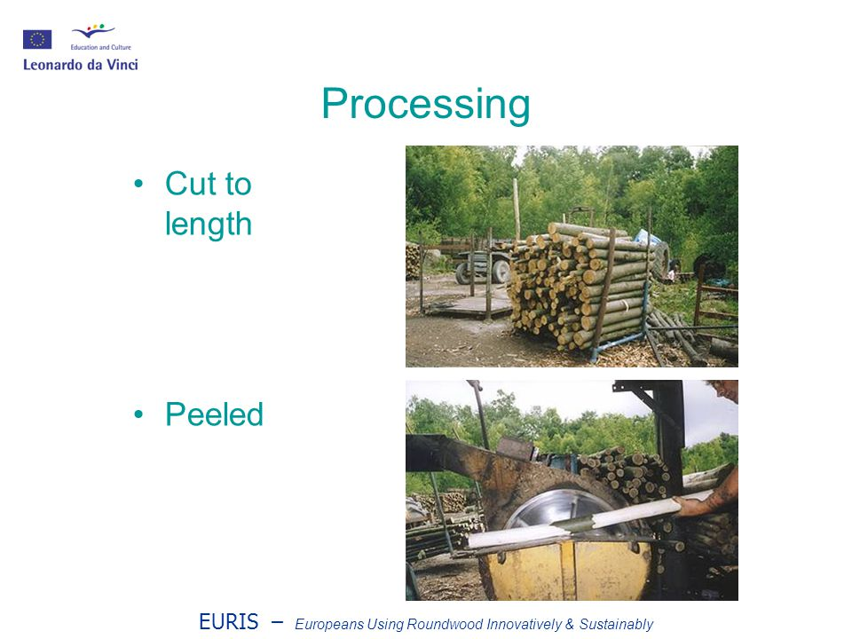 EURIS – Europeans Using Roundwood Innovatively & Sustainably Processing Cut to length Peeled