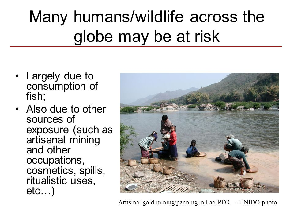 Many humans/wildlife across the globe may be at risk Largely due to consumption of fish; Also due to other sources of exposure (such as artisanal mining and other occupations, cosmetics, spills, ritualistic uses, etc…) Artisinal gold mining/panning in Lao PDR - UNIDO photo