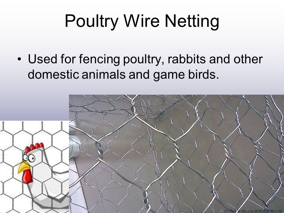 Poultry Wire Netting Used for fencing poultry, rabbits and other domestic animals and game birds.